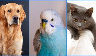 Bilinçaltın Hangi Evcil Hayvan Gibi Çalışıyor?