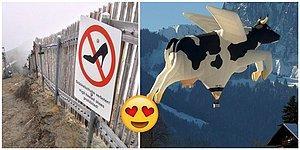 Gördüğünüz An Pılınızı Pırtınızı Toplayıp İsviçre'ye Yerleşmek İstemenize Sebep Olacak 19 Fotoğraf!