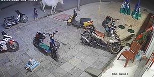 Yakınlık Kurmak İstediği Attan Çifte Yiyen Ufaklık