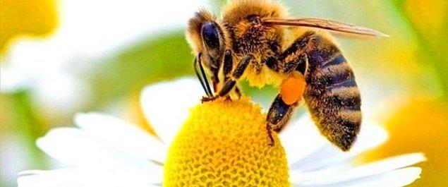 4. Almanya'da, doğal koruma altında olan arıları öldürenler 65.000 euroya kadar ceza alabiliyor.