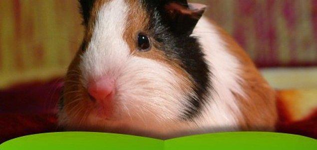 7. 1966 yılında Amerika'da Hayvan Refahı Kanunu kabul edilmiş olup, hayvanların kobay kullanımına ilişkin düzenlemeler yapılmıştır.