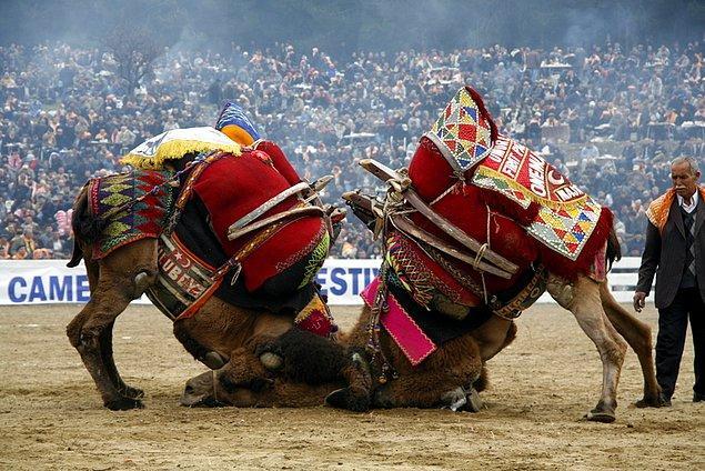 15. Macaristan'da ise her türlü hayvan dövüşü yine kanunlarca yasaklanmıştır.