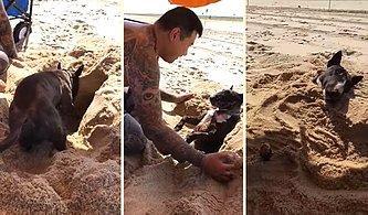 Kendini Kuma Gömdüren Aşırı Sevimli Köpek