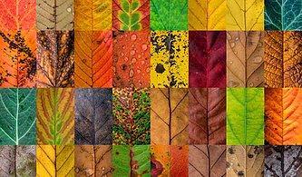 Hangi Sonbahar Rengisin?