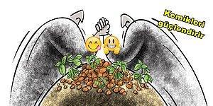 Çin Uygarlıklarında Kutsal Sayılan Soya Fasulyesini Mutlaka Tüketmeniz İçin Geçerli 11 Neden