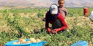 Çift Hanelerde Artışını Sürdürüyor: İşsizlik Oranı %11,6 Seviyesine Yükseldi