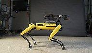Boston Dynamics'in Robot Köpeği Spot'tan Muhteşem 'Uptown Funk' Performansı