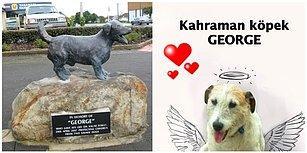 Saldırı Altındaki Çocukları Savunmak Uğruna Canından Olan Kahraman Köpek George'un Heykeli Dikildi!