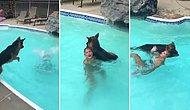 Boğulduğunu Düşündüğü İnsan Dostu İçin Anında Havuza Atlayarak Kurtarma Girişimini Başlatan Köpek