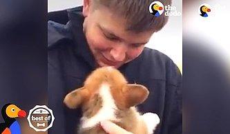 Hediye Olarak Yavru Bir Köpek Alan İnsanların Yaşadıkları Efsane Mutluluk Anları