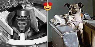 Uzayın En Sevimli Misafirleri! Test Amaçlı Uzaya Gidip Tarihe Adını Yazdırmış 15 Astronot Hayvan
