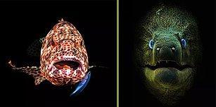 2018 Scuba Diving Dergisi Su Altı Fotoğraf Yarışmasının Galipleri Belli Oldu!