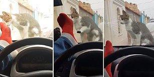 İyi Oldu İyi! Kediyi Korkutmak İsterken Arabanın Camını Çatlatan Adam
