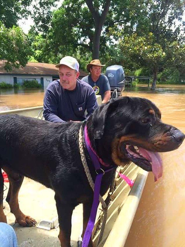 """13. """"Babam ve abim yükselen sulardan köpekleri kurtarıyor..."""""""
