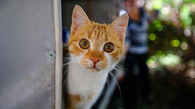 Mahalledeki kedilerin soğuk havalarda zor koşullarda yaşamasına göz yummadılar.