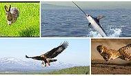 Saatte 389 Kilometre mi? İşte Vahşi Doğanın En Hızlı Hayvanları