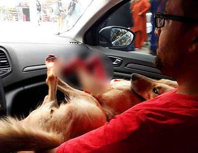 49. Nereye gidiyorsun Türkiye? - Tavuklarına saldırdığı gerekçesiyle köpeği tüfekle öldüren müezzin