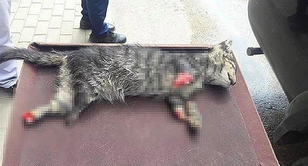 51. Başka bir gezegenin cehennemi - Dört ayağı kesilerek öldürülen yavru kedi