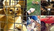 Fransa'da Pahalı Arabalarında Aslan Yavruları ile Poz Verip Instagram'da Paylaşan Cani İnsanlar