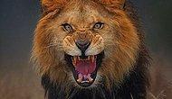 Kimi Aslanın Ağzından Kimi Namlunun Ucundan! Fotoğraf Çekeyim Derken Az Kalsın Canından Olan 10 Fotoğrafçı