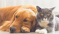 Hayvan Dostunun da Senin Kadar Özeni Hak Ettiğini Bilenlerdensen Seni Yılın En Büyük İndirimine Alalım!