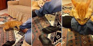 Müthiş Yaşam Enerjisi ile Psikopat Kedisi Haydar'la Başa Çıkmaya Çalışan Adam
