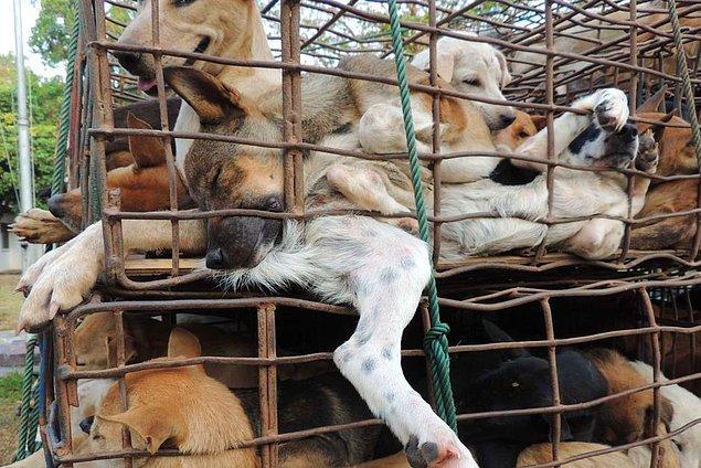 Güney Korelilerin yüzde 70'i köpek eti yemiyor.