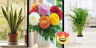 Evinizin Havasını Temizlerken Aynı Zamanda Güzelliğine Güzellik Katacak 17 Dekoratif Bitki