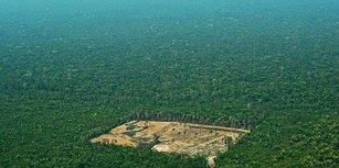 Dünyanın Akciğeri Baltalanıyor! Amazon Ormanlarında Bir Yılda Londra'nın 5 Katı Büyüklüğünde Kıyım