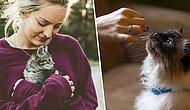 Hayvanları Koruma Derneği Uyardı: Kedilerini Vegan Beslenmeye Zorlayan Sahipler Ceza Alacak