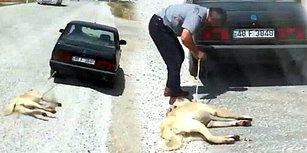 Köpeğini Arabasının Arkasına Bağlayıp Sürüklemişti: Altı Ay Barınakta Çalışma Cezası