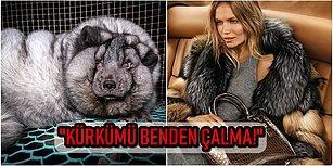 """""""Kürkler Hayvanlara Aittir İnsanlara Değil!"""" Hayvan Hakları Savunucuları Sayesinde Dev Markalar Kürk Kullanımını Durdurdu!"""
