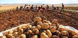 Gümrük Vergisi Sıfırlandı: Patates İthal Edeceğiz