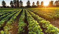Kızılırmak, Çukurova ve Sakarya Ovası Risk Altında: 80 Yıl İçinde Tarım Alanları Sular Altında Kalacak