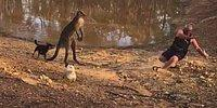 Köpeklerini Korumak İsterken Kangurunun Saldırısına Uğrayan Adam