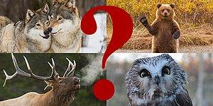 Sen Hangi Soğuk İklim Hayvanısın?