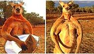 Muhteşem Kaslarıyla Herkesi Kendine Hayran Bırakan Kanguru Roger 12 Yaşında Hayata Veda Etti