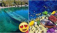 Su Altı Güzelliklerini Keşfetmek İsteyenlere Özel: Dünya Üzerinde Dalış Yapılabilecek En İyi 7 Yer!