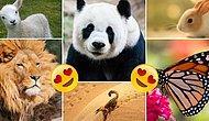Birine Aşık Olunca Hangi Hayvana Dönüşüyorsun?