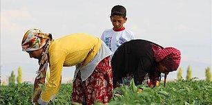 Dünyada Her On Çocuktan Biri Çalışıyor: En Fazla Çocuk İşçi Tarım Sektöründe
