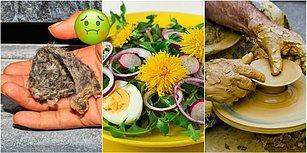 Pes Doğrusu! Tebeşirden Oyun Hamuruna, Altından Horoz İbiğine Yenilmez Bildiğimiz 12 Gıda