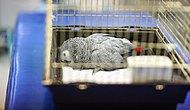 Ameliyat Edilmişti: Murat Özdemir'in Eziyet Ettiği Papağan Bahtiyar Hayatını Kaybetti