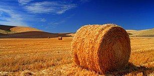 Bakan Pakdemirli 'Saman, Buğday İthal Ettiniz' Diyenlere Seslendi: 'Paramız Var ki İthalat Yapıyoruz'