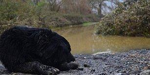Köpek Eğitim Merkezini Sel Vurdu: 8 Hayvan Hayatını Kaybetti, 2'si Kayıp