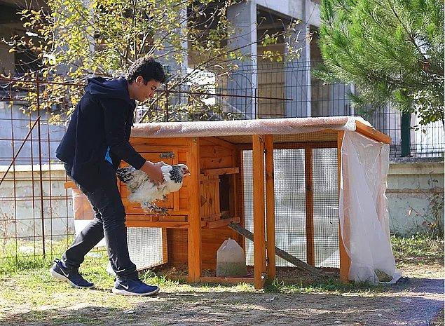 Bir de bu açıdan bakalım: Tavuklarından ayrılmayı istemeyen Hüseyin için okul yönetimi bir kümes yaptırdı!