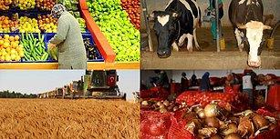 Sığır İthalatında Avrupa Lideri, Dünyada ise İkinciyiz: 2018'de Tarım ve Hayvancılıkta Neler Yaşandı?