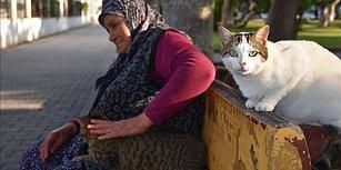 12 Yıldır Topladığı Yardımlarla Sokak Kedilerine Bakan 65 Yaşındaki Fadime Nine: 'Kediler Benim Birinci Dostum'