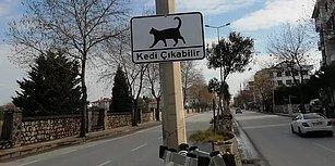 Yalova Belediyesi'nden Alkışlanacak Hareket: Sürücüler İçin 'Kedi Çıkabilir' Uyarısı