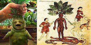 Kökü İnsana Benzeyen ve Hakkında Onlarca Korkunç Rivayet Olan Dünya'nın En Efsanevi Bitkisi: Adamotu