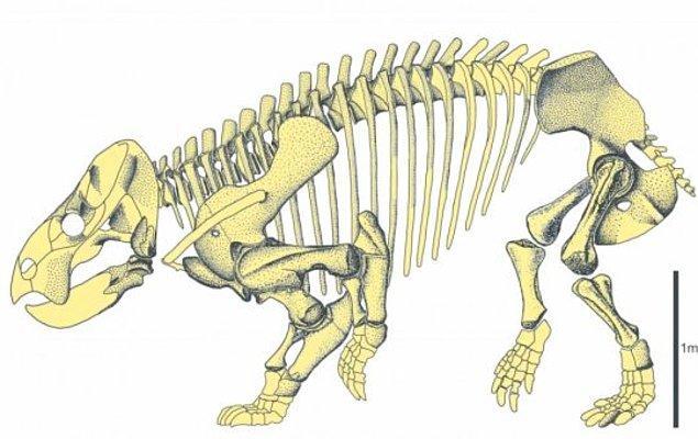 Lisowicia bojani isimli türün, en önemli özelliği ise devasa boyutlarda olması.